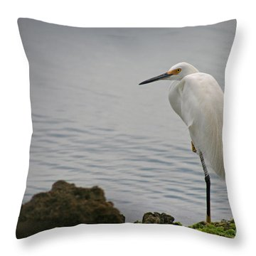 Snowy Egret Throw Pillow by E B Schmidt
