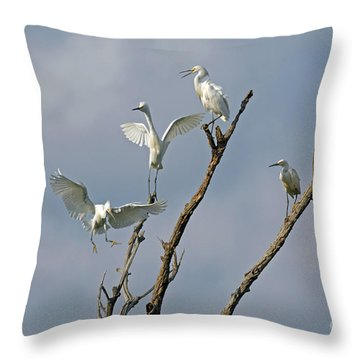 Throw Pillow featuring the photograph Snowy Egret Inn by Olivia Hardwicke