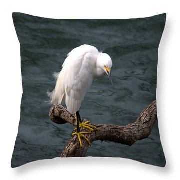 Snowy Egret Out On A Limb Throw Pillow