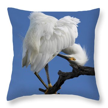 Throw Pillow featuring the photograph Snowy Egret Photograph by Meg Rousher