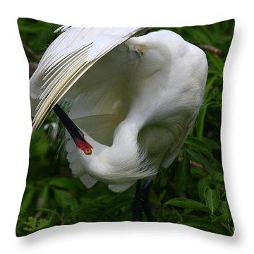 Snowy Egret Preening Throw Pillow