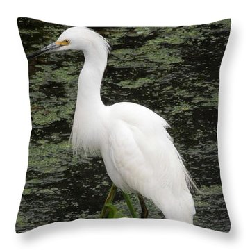 Throw Pillow featuring the photograph Snowy Egret by Ron Davidson