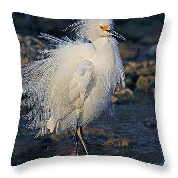 Snowy Egret Show Off Throw Pillow