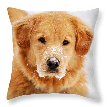 Snowy Golden Retriever Throw Pillow by Christina Rollo
