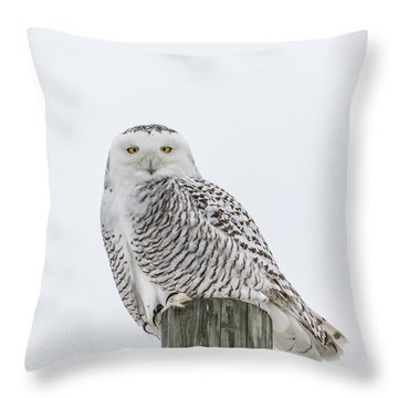 Snowy Owl 2014 1 Throw Pillow