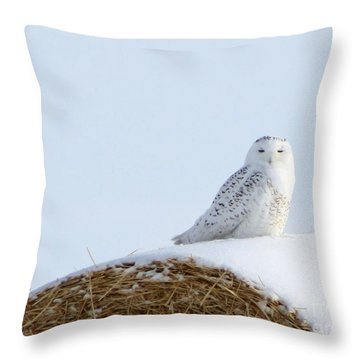 Snowy Owl Throw Pillow by Alyce Taylor