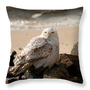 Snowy Owl At Forsythe Throw Pillow