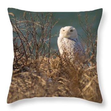 Snowy Owl At The Beach Throw Pillow
