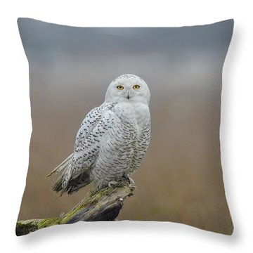Throw Pillow featuring the photograph Snowy Owl  by Daniel Behm