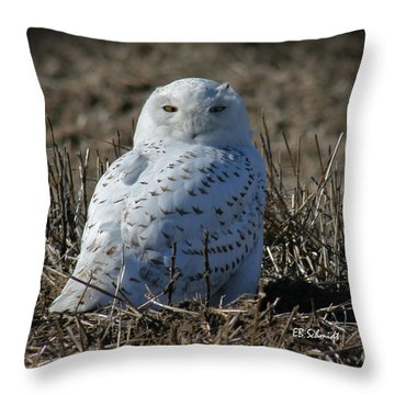Snowy Owl Throw Pillow by E B Schmidt