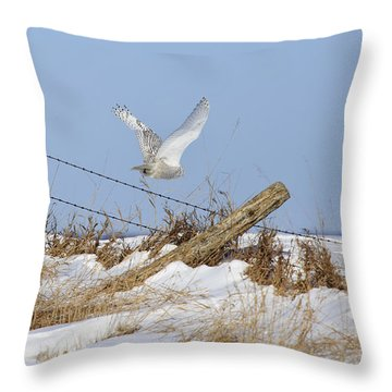 Snowy Owl Flight Throw Pillow