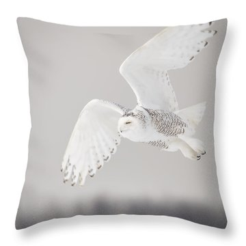 Snowy Owl In Flight 4 Throw Pillow by Thomas Young