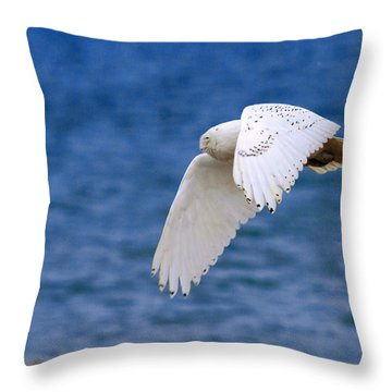 Snowy Owl In Flight Throw Pillow by Aaron Smith