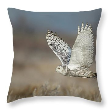 Throw Pillow featuring the photograph Snowy Owl In Flight by Daniel Behm