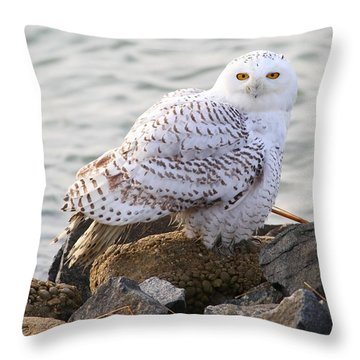 Snowy Owl In New Jersey Throw Pillow