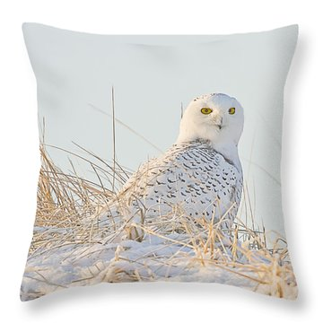 Snowy Owl In The Snow Covered Dunes Throw Pillow
