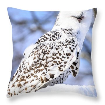 Snowy Owl Look Out Throw Pillow by LeeAnn McLaneGoetz McLaneGoetzStudioLLCcom