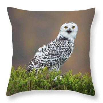 Snowy Owl Throw Pillows