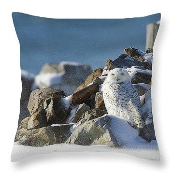 Snowy Owl On A Rock Pile Throw Pillow