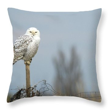 Snowy Owl On Fence Post 2 Throw Pillow