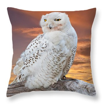 Snowy Owl Perched At Sunset Throw Pillow by Jeff Goulden