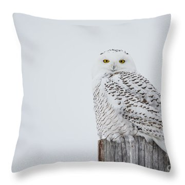 Snowy Owl Perfection Throw Pillow by Cheryl Baxter