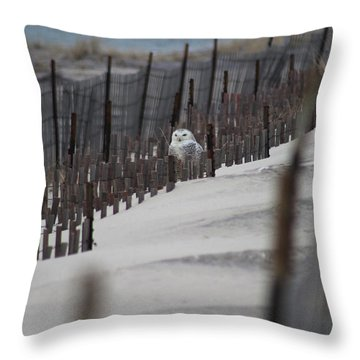 Snowy Owl Westhampton New York Throw Pillow by Bob Savage