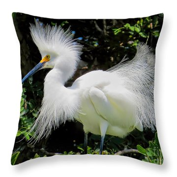 Snowy White Egret Breeding Plumage Throw Pillow by Jennie Breeze