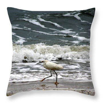 Snowy White Egret Throw Pillow by Kim Pate