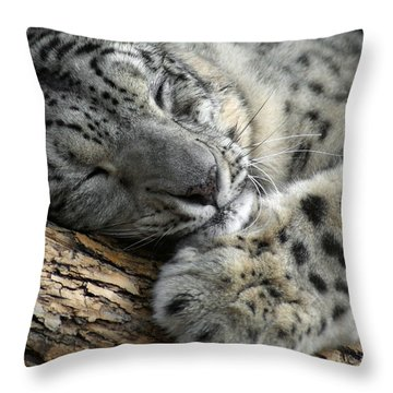 Snuggles Throw Pillow by Ernie Echols