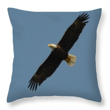 Soaring Bald Eagle Throw Pillow by Jeff at JSJ Photography