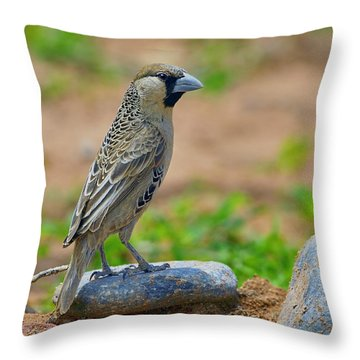 Sociable Weaver Throw Pillow by Tony Beck