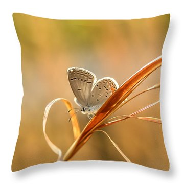 Soft Baby Blue Throw Pillow by Debbie Green