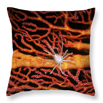 Soft Coral Crab On Red Gorgonian Throw Pillow