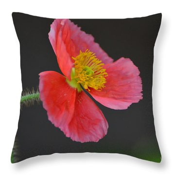 Soft Throw Pillow by Debby Pueschel