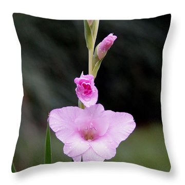 Soft Pink Glad Throw Pillow by Kim Pate