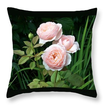 Soft Trio Throw Pillow