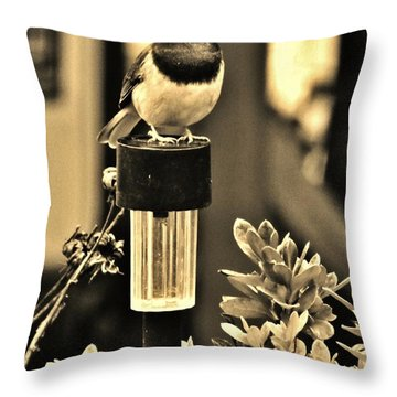 Throw Pillow featuring the photograph Solar Light Sitting by VLee Watson