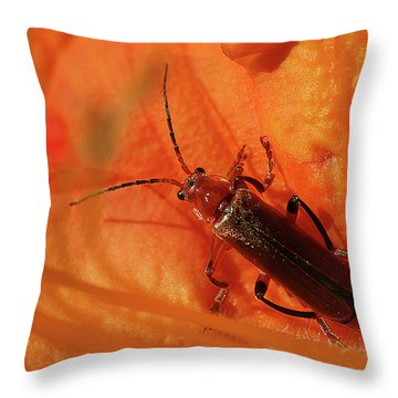 Soldier Beetle Throw Pillow