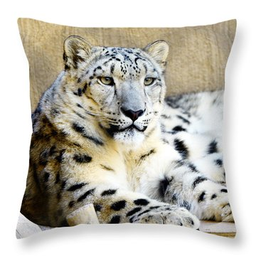 Solid Throw Pillow by Susanne Still