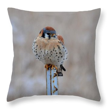 Solitaire Kestrel Throw Pillow