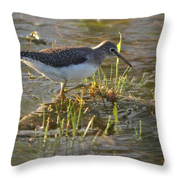 Solitary Sandpiper 2 Throw Pillow