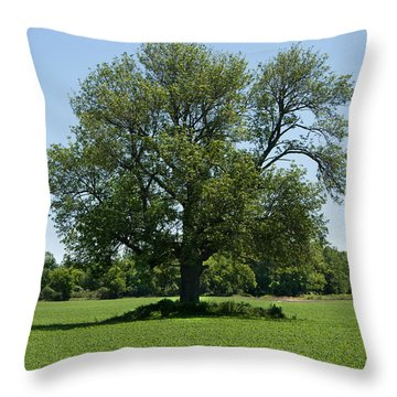 Throw Pillow featuring the photograph Solitude by Courtney Webster