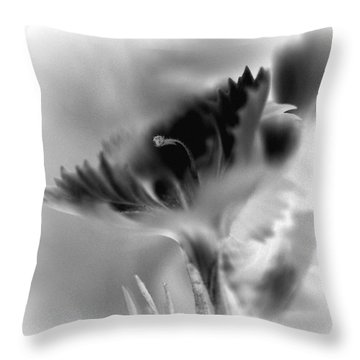Solo Throw Pillow by Christine Ricker Brandt