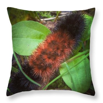 Someday I'll Fly Throw Pillow
