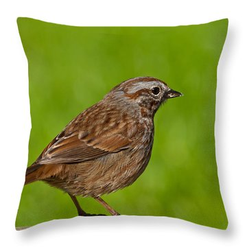 Song Sparrow On A Log Throw Pillow