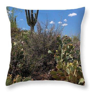 Sonoran Desert Spring Throw Pillow by Joe Kozlowski