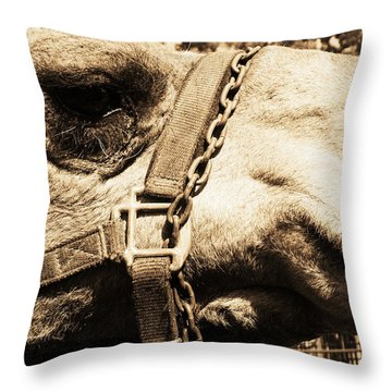 Soul Of A Camel Throw Pillow