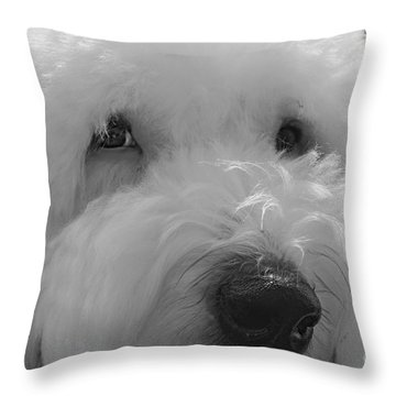 Soulful Eye's Old English Sheep Dog Throw Pillow