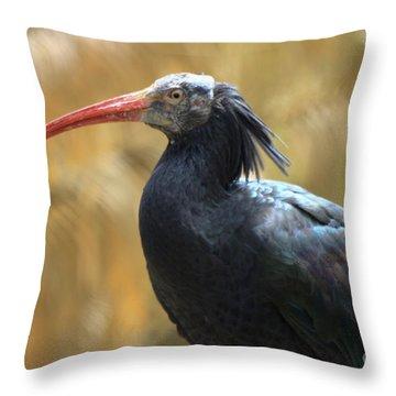 Northern Bald Ibis Throw Pillow